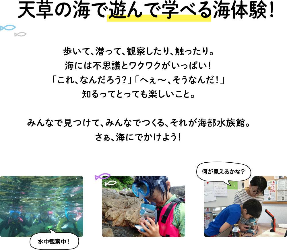 天草の海で遊んで学べる海体験!
